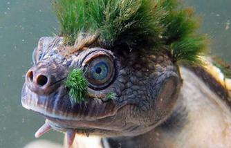 Turtle Punk